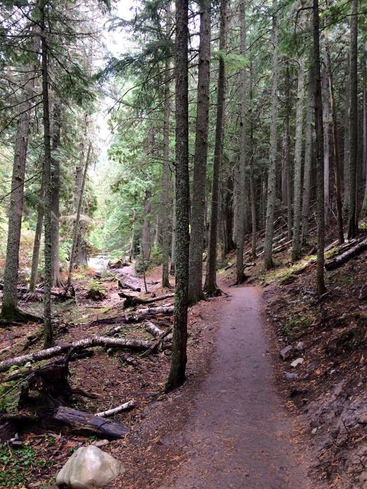 2015-trail-cedars